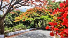 blooming-may-flowers-coonoor-with-its-colorful-display