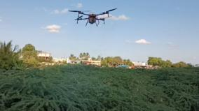 first-time-in-tamil-nadu-destruction-of-juniper-plants-by-drone-in-jayangondam-area