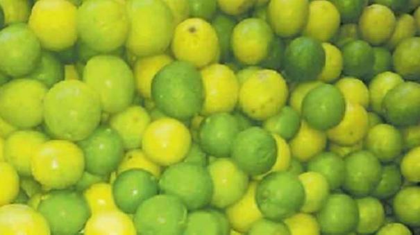 lemon-price-soar-high-in-madurai