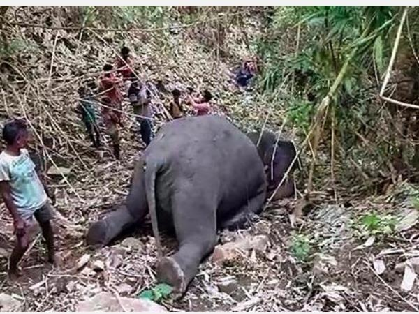 18-elephants-killed-in-lightning-strikes-in-assam-s-nagaon