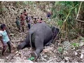 18-elephants-killed-in-lightning-strikes-in-assam-s-nagaon