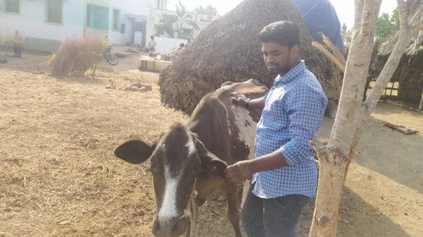 tree-leaves-for-livestock-to-alleviate-fodder-shortages