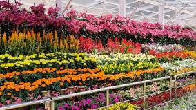 ooty-flower-show-thorugh-online