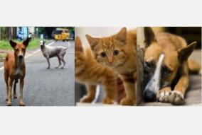 how-can-food-be-given-to-stray-animals-without-food-high-court-question-to-the-government