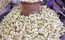 corona-curfew-has-affected-jasmine-flower-cultivation