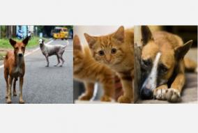 procedure-committee-on-feeding-of-animals-in-curfew-high-court-order