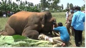 tragedy-again-male-elephant-killed-in-minyaveli-in-satyamangalam-forest