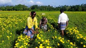 flower-merchants-and-agriculturists-face-loss-due-to-lockdown