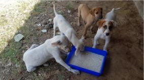 livestock-starving-in-curfew-government-of-tamil-nadu-provides-first-phase-food-to-animal-welfare-organizations