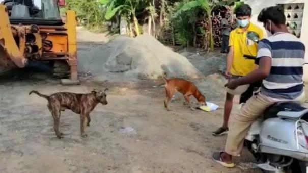 puducherry-youths-helos-street-dogs