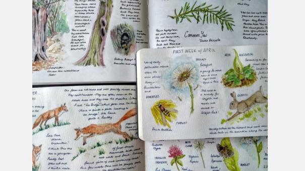 international-nature-journaling-week