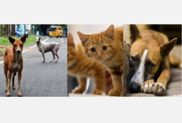 starving-street-animals-high-court-appeals-to-private-companies-to-provide-funding