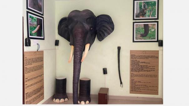 for-the-first-time-in-tamil-nadu-dedicated-elephant-awareness-center-in-coimbatore