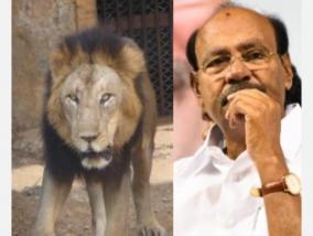 need-an-inquiry-into-lion-s-affected-corona-virus-ramadas-insists