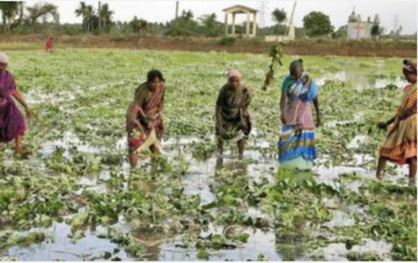 tirunelveli-farmers