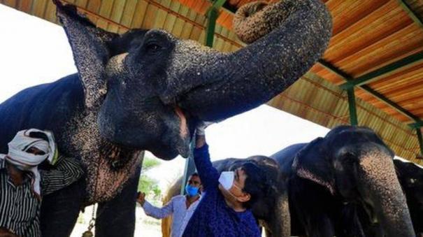 covid-test-for-elephants