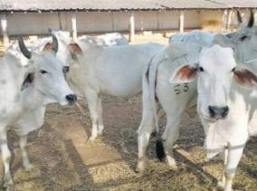 man-shot-dead-for-kidnapping-cows-in-mathura-police-rescue-5-people