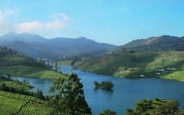 theni-cultivation