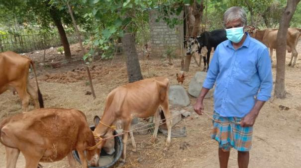 corona-relief-fund-sells-foster-calves-for-son-s-tuition-fees-collector-praises-tanjore-disabled