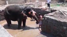 thiruvanaikaval-temple-exclusive-bathtub-for-elephant