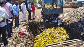 destruction-of-4-tons-of-chemically-ripened-mangos-in-trichy