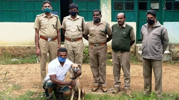 mob-dogs-on-a-mission-to-detect-forest-crime-in-the-nilgiris