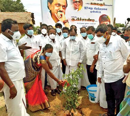 1-000-saplings