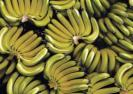 india-exported-1-91-lakh-tonne-banana-worth-rs-619-crore-during-2020-21