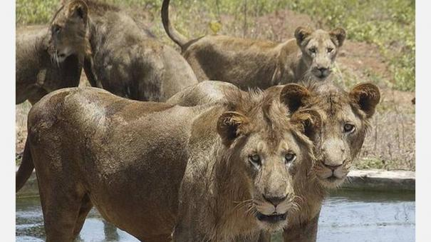 task-force-headed-by-ias-officer-to-protect-wildlife