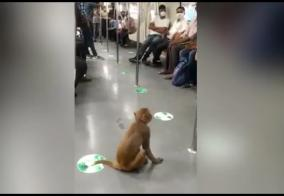 monkey-traveling-on-delhi-metro-train-violating-security-video-goes-viral