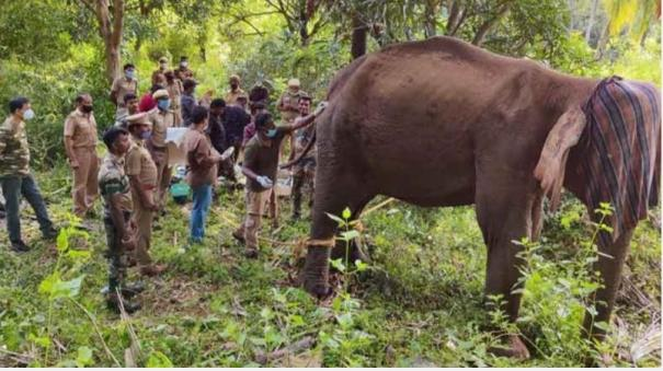 the-body-of-a-female-elephant-that-died-during-treatment-in-the-forest-near-kumari-was-sent-for-examination