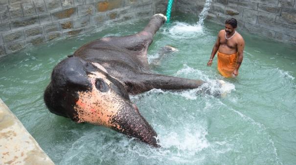elephant-akila-enjoys-bathing-elephant-akila-enjoys-bathing