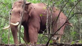 radio-collar-for-bahubali-elephant