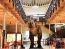government-museums-including-egmore-museum-opening-daily-till-5-pm