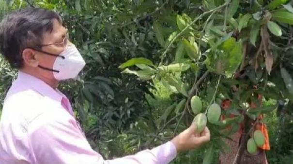 121-varieties-of-mangoes-in-up