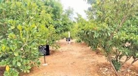 harvesting-fruits-on-a-variety-of-trees