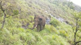 elephant-fodder-crops-documentation-of-43-native-fodder-tree-and-grass-species-by-coimbatore-forest-college-research