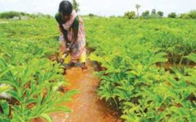 cultivation-of-vegetables