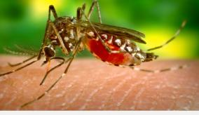 kerala-reports-first-zika-virus-infection-this-year-samples-sent-to-pune