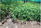 saplings-in-pudukkottai-can-be-applied-for-on-demand-forest-department-to-encourage-afforestation-on-private-lands
