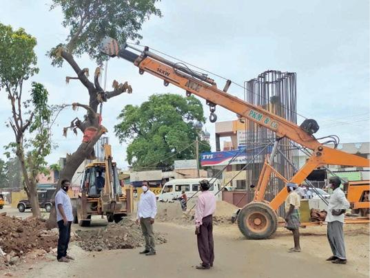 dig-up-the-tree-and-replant