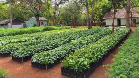 free-plant-samples-in-covai