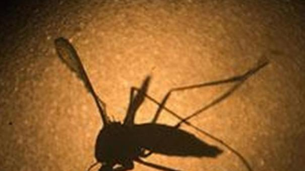 one-more-tests-positive-for-zika-virus-19-cases-now-in-kerala
