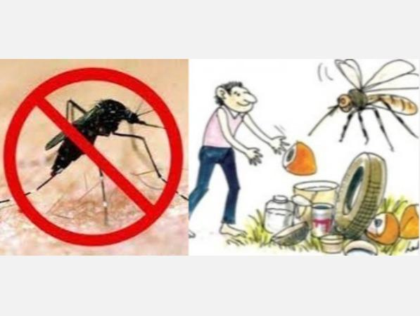 can-dengue-breeding-mosquitoes-be-raised-dengue-is-actively-spreading-in-tamil-nadu