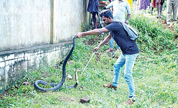 world-snake-day