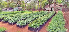 free-saplings