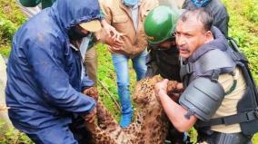 cheetah-died-in-cunnoor