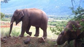 forest-department-on-elephant-corridor