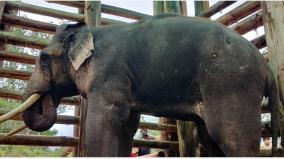 ordered-to-release-the-rivaldo-elephant-in-captivity-into-the-wild