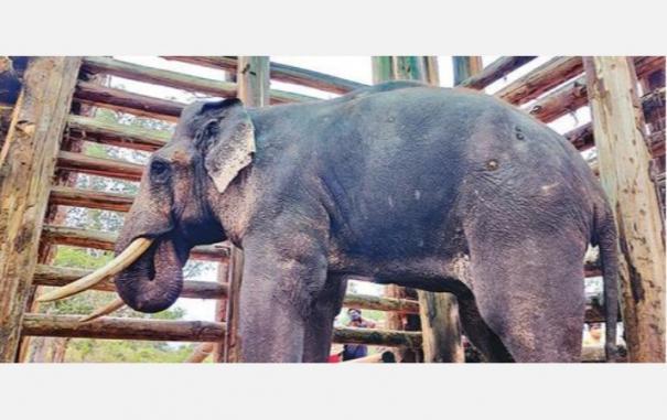 revolto-elephant